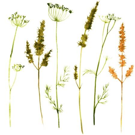 cereales: Conjunto de acuarela dibujo de flores silvestres, hierbas y ramas, plantas silvestres pintadas, el color de dibujo conjunto floral, dibujado a mano ilustraci�n vectorial