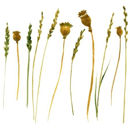 Set van aquarel tekening wilde bloemen, kruiden en takjes, geschilderd wilde planten, kleur tekening bloemen set, met de hand getekende vector illustratie