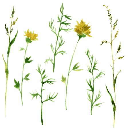 Set of watercolor drawing wild flowers, herbs and twigs, painted  wild plants, color drawing floral set, hand drawn vector illustration
