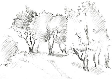 arboleda: bosque de árboles de hoja caduca, pintado lápiz de grafito en el fondo blanco, bosquejo dibujado a mano del paisaje, ilustración vectorial