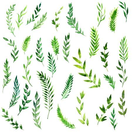 helechos: conjunto de ramas abstractas con las hojas verdes de dibujo por la acuarela, dibujados a mano elementos de pintura art�stica