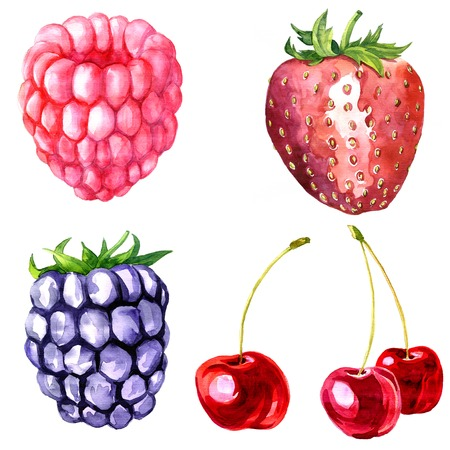watercolor drawing blackberry, artistic painting berry, hand drawn vector illustration Banco de Imagens