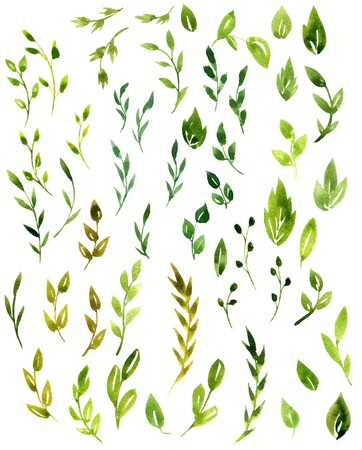 set of abstract branches with green leaves drawing by watercolor, hand drawn artistic painting elements 스톡 콘텐츠