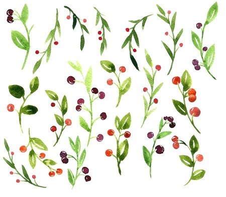 foxberry: set of watercolor green branches with leaves and berries, hand drawn artistic painting design elements Stock Photo