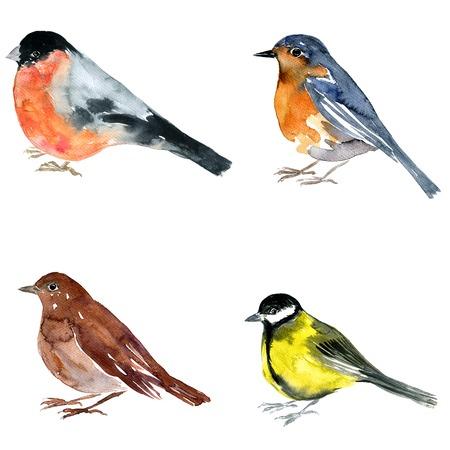 oiseau dessin: aquarelle dessin oiseau, artistique rossignol de la peinture à fond blanc, la main Illustration dessinée