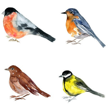 waterverftekening vogel, artistieke schilderen nachtegaal op een witte achtergrond, met de hand getrokken illustratie