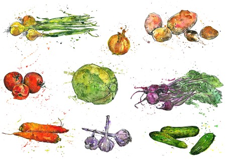 Garlic, drawing by ink and watercolor with paint stains, hand drawn vegetables, vintage design elements, hand drawn vintage artistic painting illustration Stock Photo