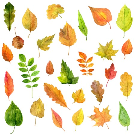 artistic painting set of green leaves drawing by watercolor, hand drawn illustration 写真素材