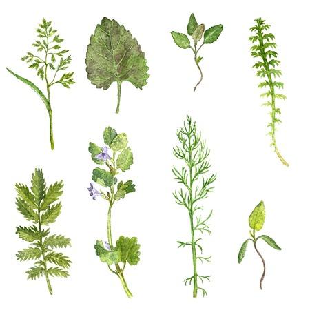Set van aquarel tekening wilde bloemen, kruiden en bladeren, geschilderd wilde planten, botanische illustratie in vintage stijl, kleur tekening bloemen set, met de hand getrokken illustratie