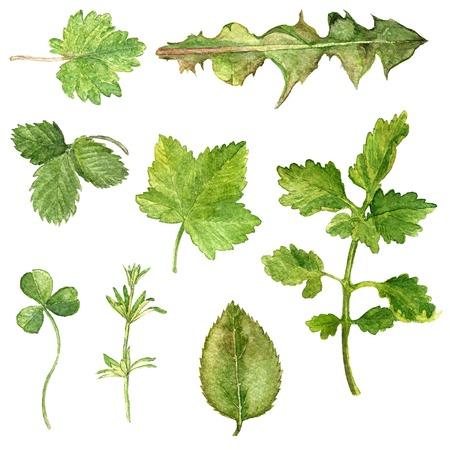 Set van aquarel tekening bladeren, geschilderd wilde planten, botanische illustratie in vintage stijl, kleur tekening bloemen set, met de hand getrokken illustratie Stockfoto