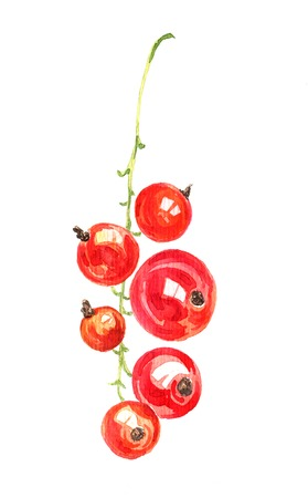red currant: watercolor drawing berries, artistic painting red currant, hand drawn illustration