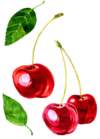 vector watercolor drawing cherries, artistic painting berries and leaves, hand drawn vector illustration