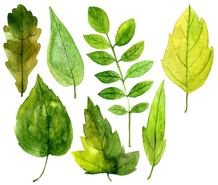 artistic painting set of green leaves drawing by watercolor, hand drawn illustration Stock Photo