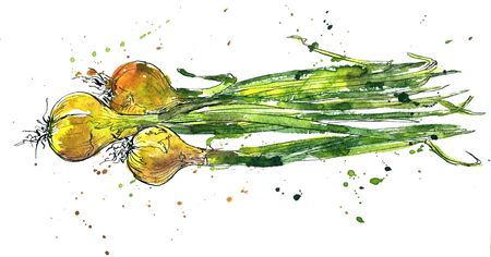 greengrocery: Green onions, drawing by ink and watercolor with paint stains, hand drawn vegetables, vintage design elements, hand drawn vintage artistic painting illustration Stock Photo