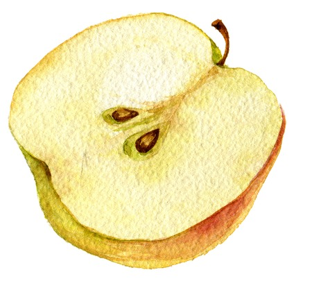 half apple: Half apple drawing by watercolor, hand drawn artistic painting illustration