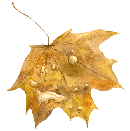 allegory: yellow autumn maple leaf with drops of rain, allegory autumn, hand drawn illustration Stock Photo