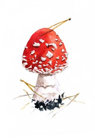 grebe: amanita,poisonous mushroom,darwing by watercolor,hand drawn artistic painting  illustration Stock Photo