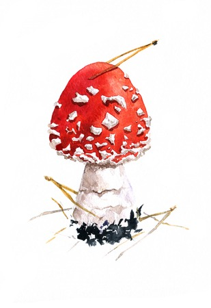 amanita,poisonous mushroom,darwing by watercolor,hand drawn artistic painting  illustration Stock Photo
