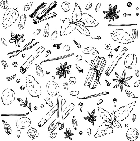 allspice: spices, vector food set, ink drawing vector elements Illustration
