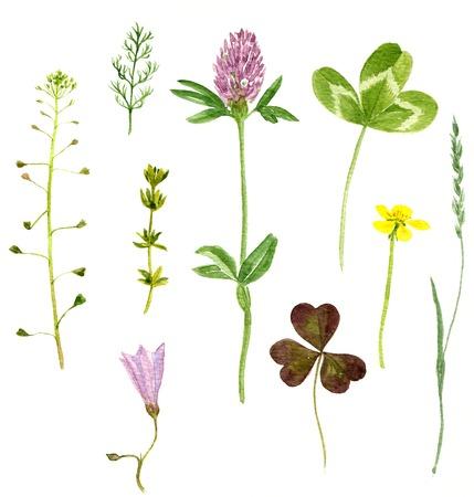 Set van aquarel tekening wilde bloemen, kruiden en bladeren, geschilderd wilde planten, botanische illustratie in vintage stijl, kleur tekening bloemen set