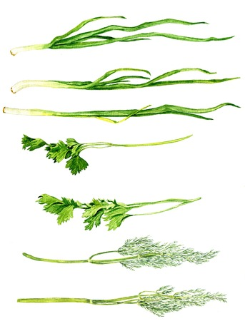 green stuff: set of green stuff drawing by watercolor at white background, chives, parsley and dill, hand drawn  artistic painting illustration