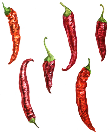 chilli pepper: red chili pepper drawing by watercolor at white background, artistic painting vegetables,  hand drawn illustration