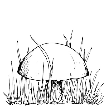 grebe: mushroom at grass, ink pen drawing, vintage style botanical illustration,  monochrome black line drawing floral composition Illustration