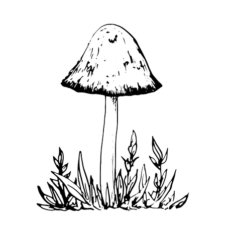 grebe: poisonous mushroom at grass, ink pen drawing, vintage style botanical illustration,  monochrome black line drawing floral composition
