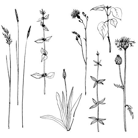 ハーブと花を描くインク ペンの設定、ビンテージ スタイルの植物図、モノクロ黒線描画花セット、手描きの背景イラスト