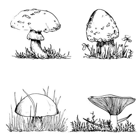 mushrooms at grass, ink pen drawing set, vintage style botanical illustration,  monochrome black line drawing floral composition
