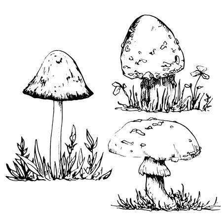 poisonous mushrooms at grass, ink pen drawing set, vintage style botanical illustration,  monochrome black line drawing floral composition Illustration