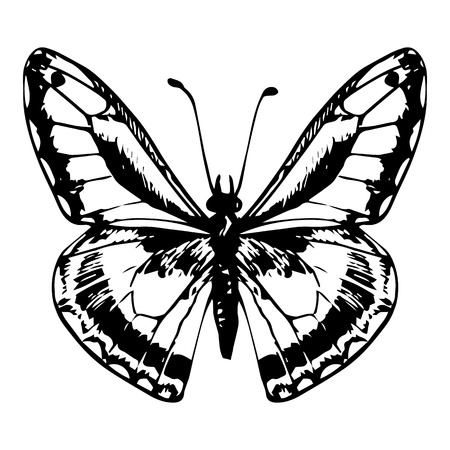 line drawing: hand drawn butterfly, line drawing vector element