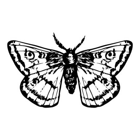 moth: hand drawn butterfly, night moth, peacock butterfly,line drawing vector element Illustration