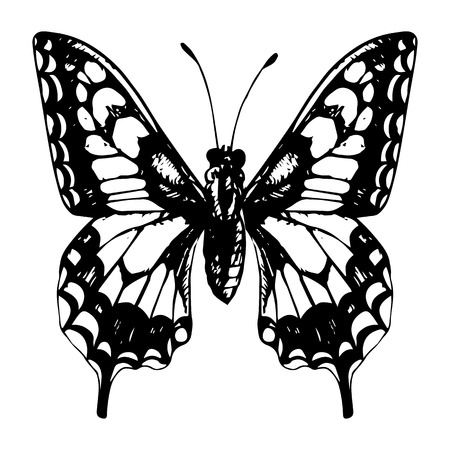 machaon: machaon, hand drawn butterfly, line drawing vector element