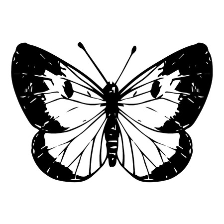 line drawing: cabbage moth, hand drawn butterfly, line drawing vector element