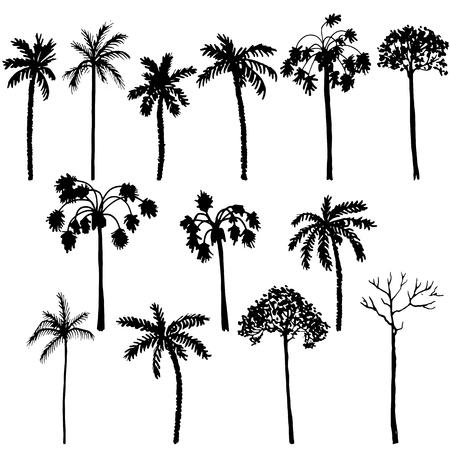 set van palmboom silhouetten, exotische bomen, hand getrokken vector design elementen