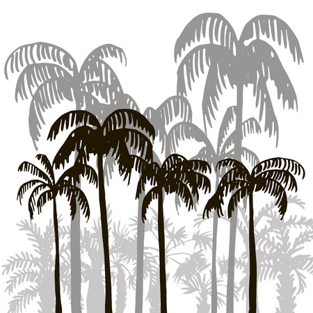 jungle: tropical forest, rain forest, jungle, vintage template, palm tree silhouettes at white background, exotic trees, hand drawn vector illustration Illustration