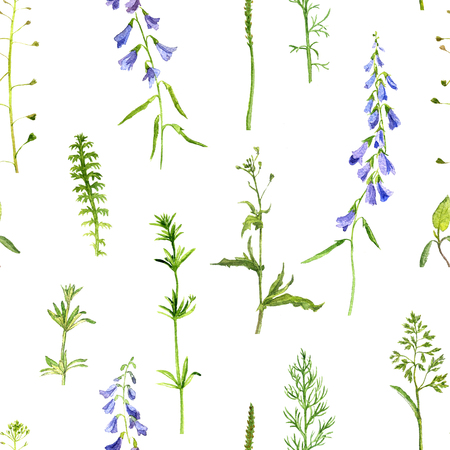 background colors: seamless pattern with watercolor drawing wild flowers, herbs and leaves, painted  wild plants, botanical illustration in vintage style, color drawing floral seamless background