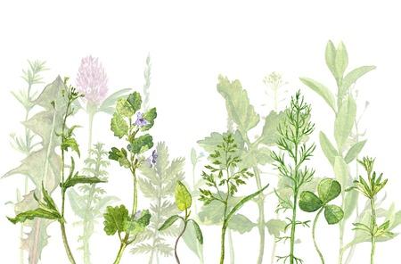 waterverftekening van wilde bloemen, kruiden en bladeren, geschilderd wilde planten, botanische illustratie in vintage stijl, kleur tekening bloemen achtergrond