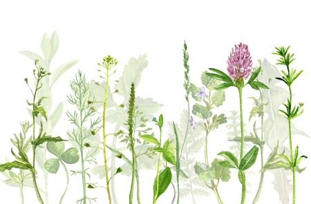 field flowers: watercolor drawing wild flowers, herbs and leaves, painted  wild plants, botanical illustration in vintage style, color drawing floral background