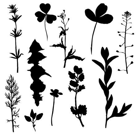 野生の花のシルエット、分離花、ハーブおよび葉、野生植物、白黒ベクトル花要素のセット