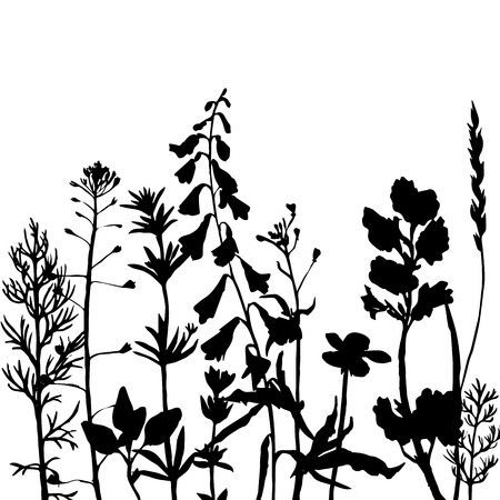 wild grass: grass silhouettes,  wild flowers, herbs and leaves,  wild plants, monochrome vector floral background