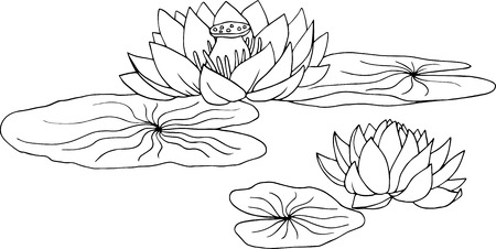lotus, water lily flowers and leaves, hand drawn vector illustration