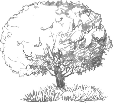 deciduous forest: deciduous tree with leaves and grass drawing by pencil, sketch of wild nature, forest sketch, hand drawn vector illustration