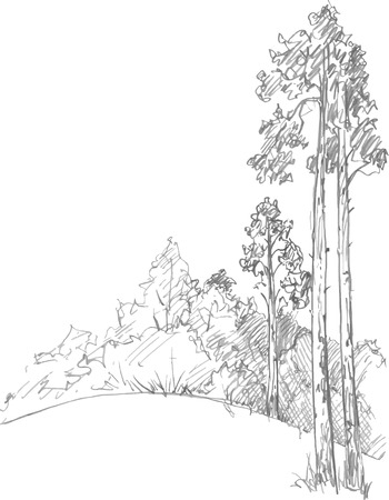 drawing trees: pine trees and bushes drawing by pencil, sketch of wild nature, forest sketch, hand drawn vector illustration