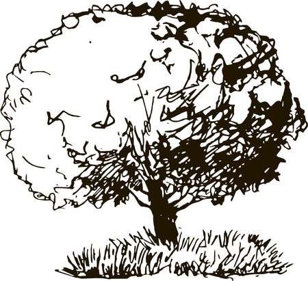 tree line: deciduous tree with leaves and grass drawing by pencil, sketch of wild nature, forest sketch, hand drawn vector illustration