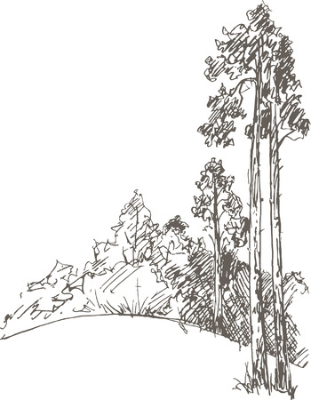 larch tree: pine trees and bushes drawing by pencil, sketch of wild nature, forest sketch, hand drawn vector illustration