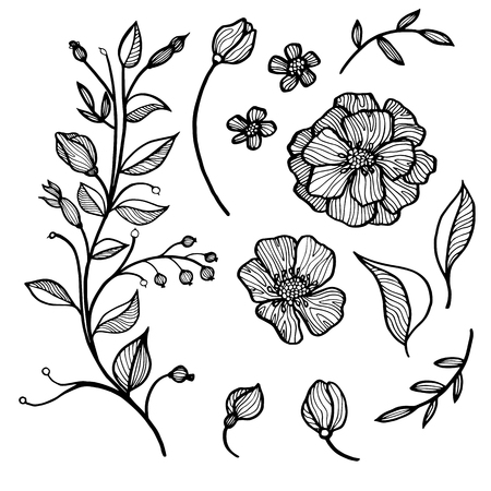 twigs: hand drawn vector set of flowers and leaves, buds and twigs Illustration