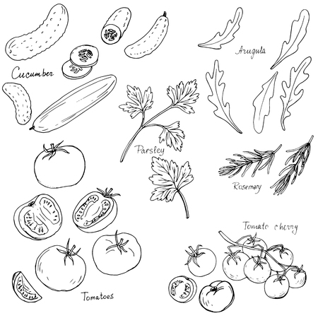 potherb: hand drawn vegetables, tomatoes,cucumbers and green stuff, hand drawn vector illustration Illustration