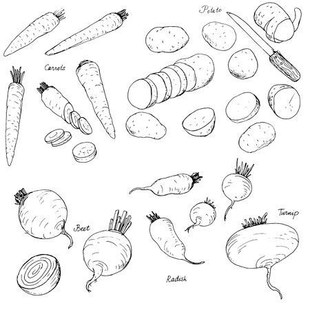 potherb: hand drawn root vegetables, carrots, potatoes, radishes and turnips, hand drawn vector illustration Illustration